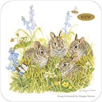 Young Cottontails, By Morgan Warren